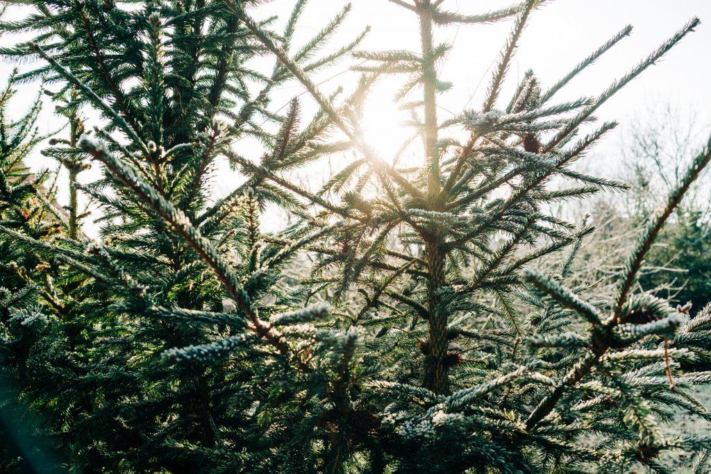 Novoroční zamyšlení 2020 les Újezd nad Lesy